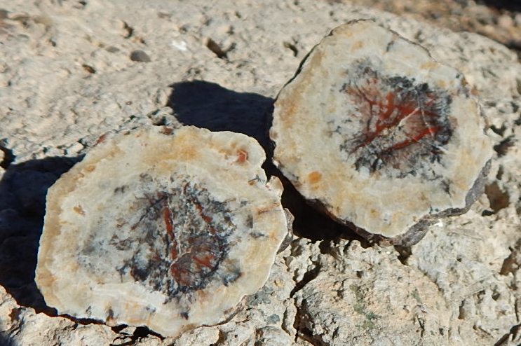 jasper after barite cut & polished nodule halves, utah