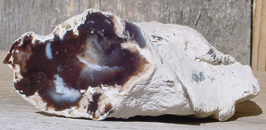 Hubbard Basin Petrified Wood