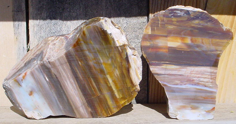 Oregon Petrified Wood