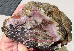 #383 Coprolite Rough