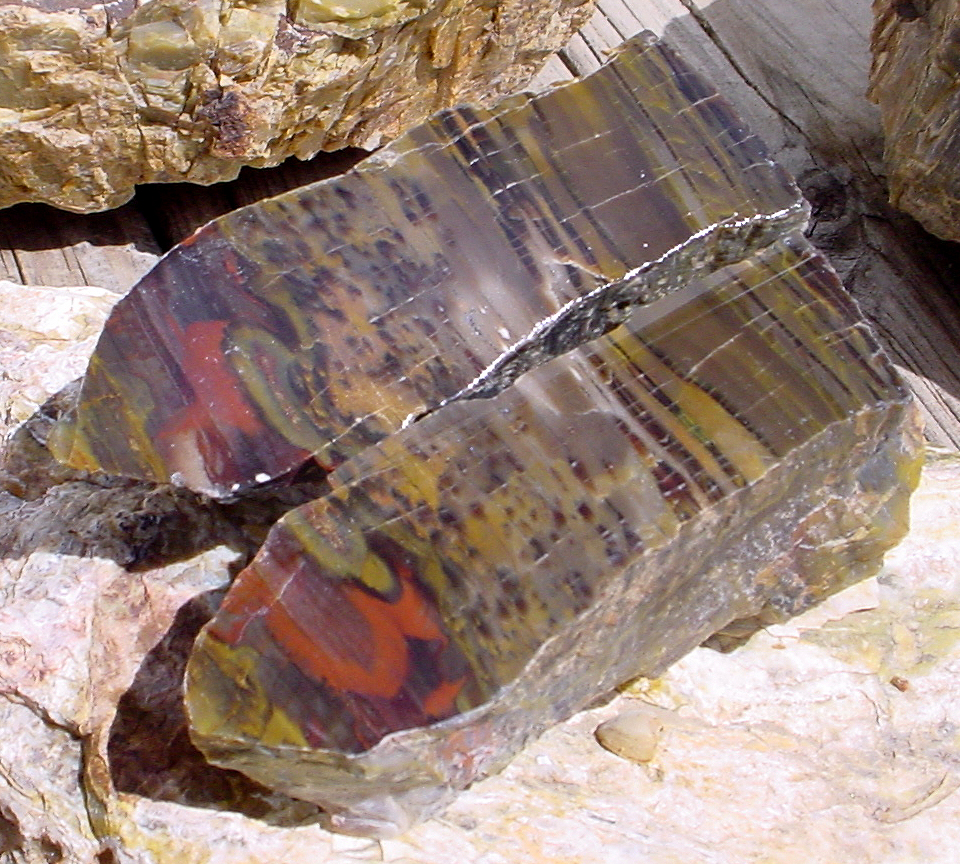escalante petrified wood